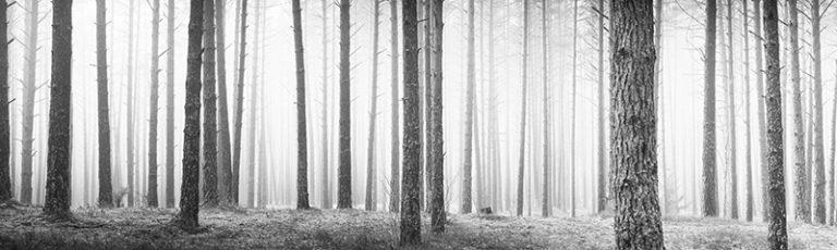 Fotomural Panoramic Niebla-Panoramic