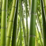 Fotomural Premium Bambú