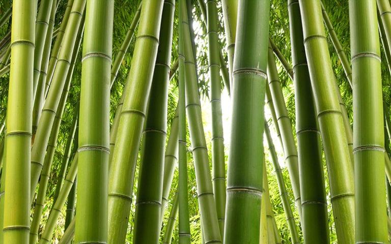 Fotomural Premium Bambú-Premium