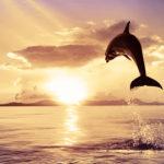 Fotomural Premium Delfín