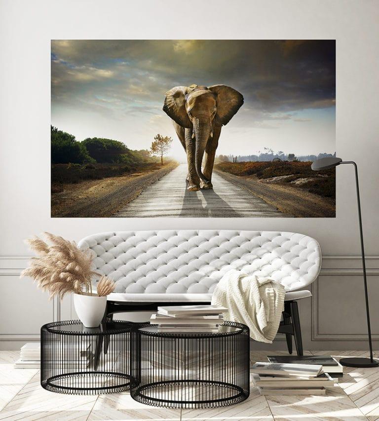 Fotomural Premium Elefante-Premium