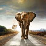 Fotomural Premium Elefante