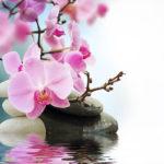 Fotomural Premium Flor Rosa