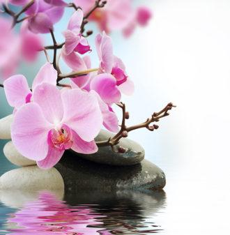 Fotomural Premium Flor Rosa-Premium