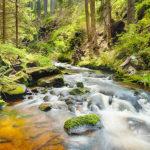 Fotomural Premium Naturaleza