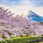 Fotomural Premium Primavera