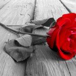 Fotomural Premium Rosa