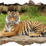 Vinilo 3D tigre