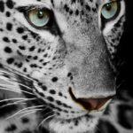 Vinilo para Puertas Leopardo Blanco