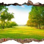 Vinilo 3D Campo
