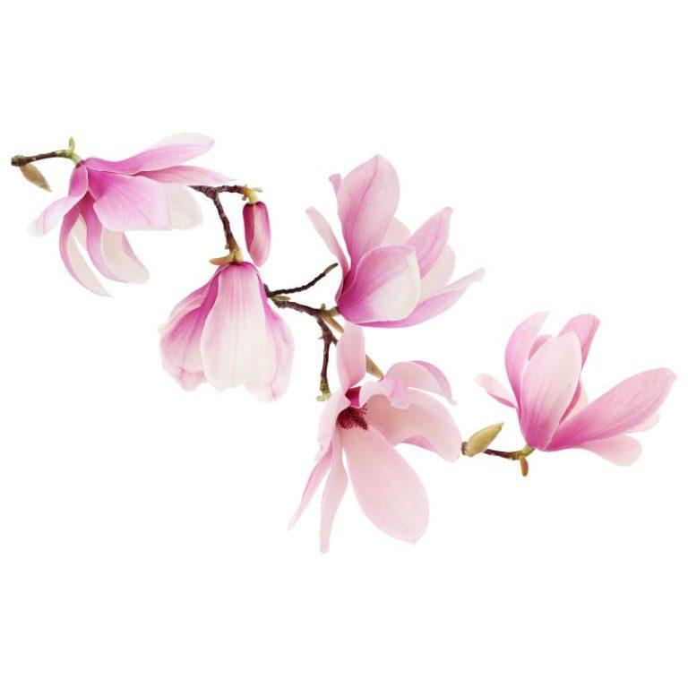 Ambadecor | Vinilos | Fotomurales | Vinilo Floral 2-Vinilo monomérico autoadhesivo
